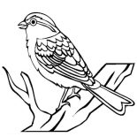 Birds, Chipping Sparrow Bird Coloring Page: Chipping Sparrow Bird Coloring Page