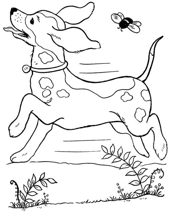 Dogs, : Dog Running Wild with a Bee Coloring Page
