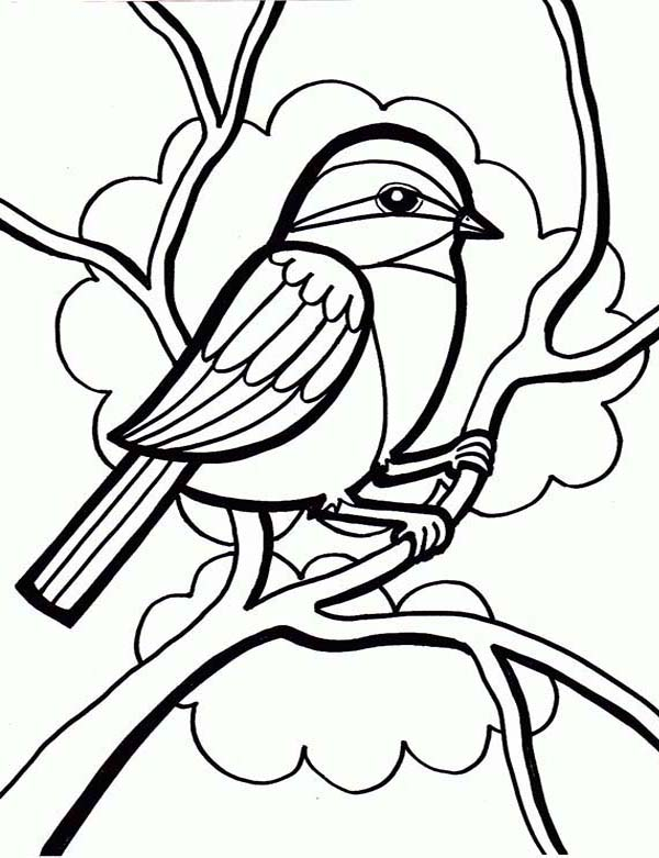 Birds, : Drawing a Little Cute Bird Coloring Page