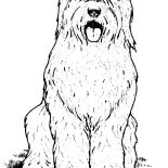 Dogs, Hairy Dog Coloring Page: Hairy Dog Coloring Page