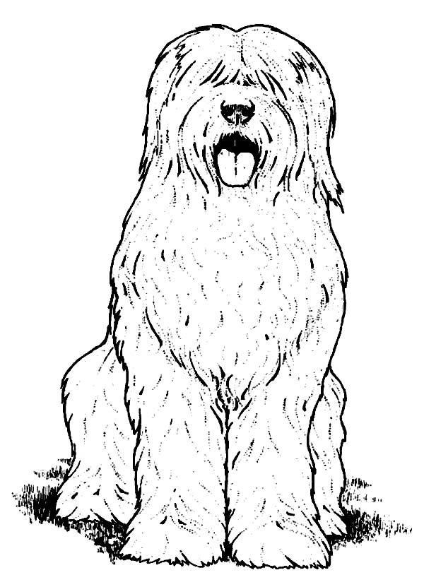 Dogs, : Hairy Dog Coloring Page