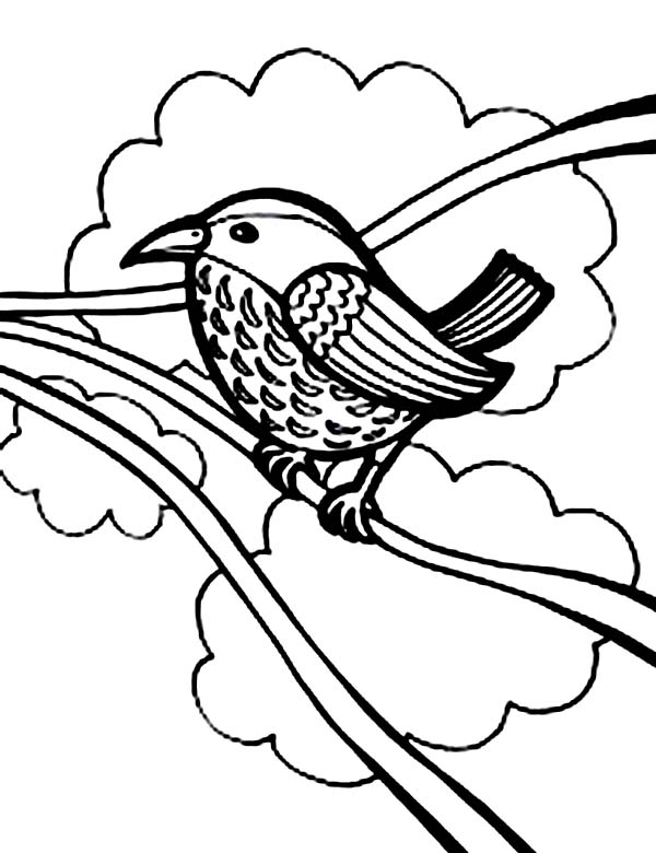 Birds, : How to Draw Bird Coloring Page