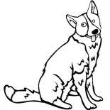 Dogs, Karelian Bear Dog Coloring Page: Karelian Bear Dog Coloring Page