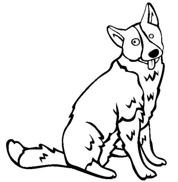 Dogs, : Karelian Bear Dog Coloring Page