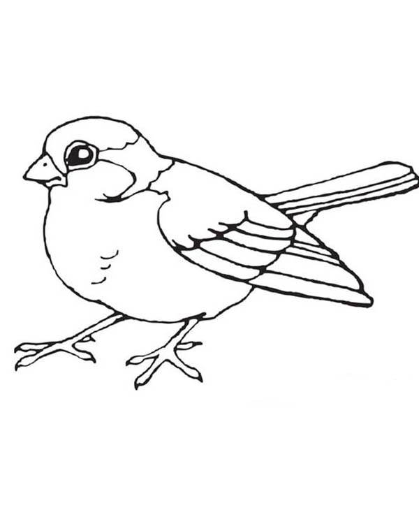 Little Bird Coloring Page Color