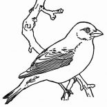 Birds, Picture Of Bird Coloring Page: Picture of Bird Coloring Page
