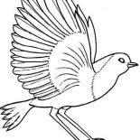 Birds, Robin Bird Coloring Page: Robin Bird Coloring Page