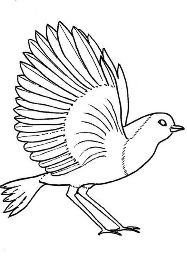 Birds, : Robin Bird Coloring Page