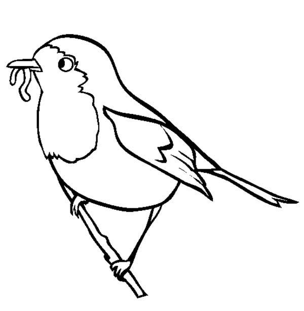 Birds, : Robin Bird Eat Worm Coloring Page