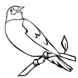 Birds, Robin Bird Singing In The Morning Coloring Page: Robin Bird Singing in the Morning Coloring Page