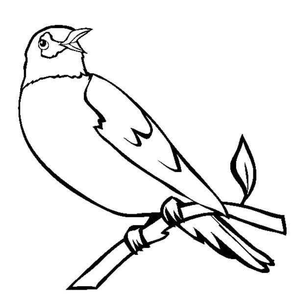 Birds, : Robin Bird Singing in the Morning Coloring Page