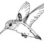 Birds, Ruby Throated Hummingbird Bird Coloring Page: Ruby Throated Hummingbird Bird Coloring Page