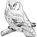 Birds, Screech Owl Bird Coloring Page: Screech Owl Bird Coloring Page