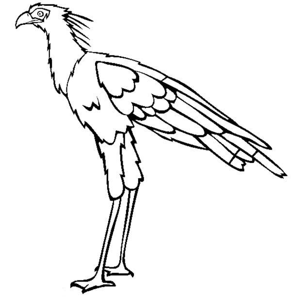 Birds, : Secretary Bird Coloring Page