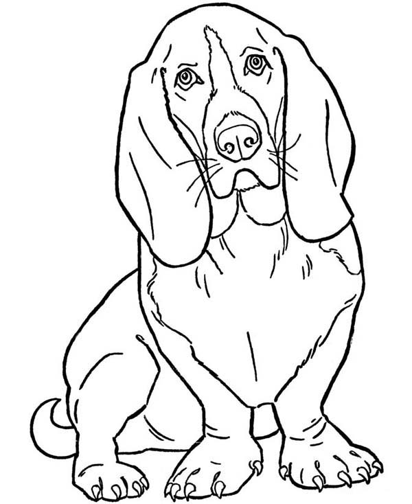 Dogs, : Slinky Dog Coloring Page