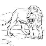 Lion, African Lion Coloring Page: African Lion Coloring Page