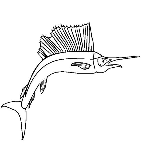 Swordfish, : Awesome Drawing of Sailfish Swordfish Coloring Page
