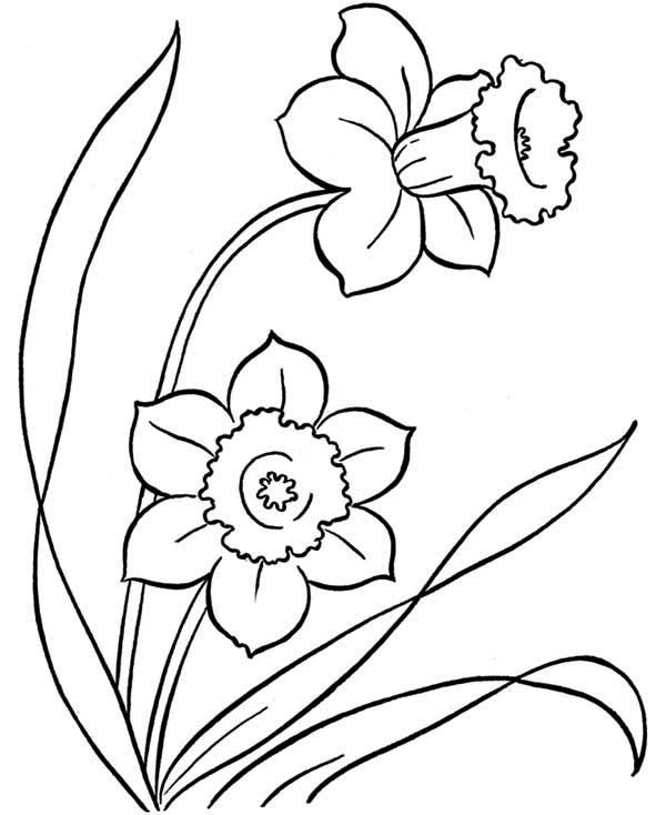 Spring Flower, : Awesome Drawing of Spring Flower Coloring Page