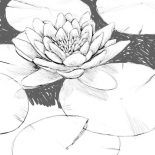 Lily Pad, Beautiful Drawing Of Lily Pad Coloring Page: Beautiful Drawing of Lily Pad Coloring Page