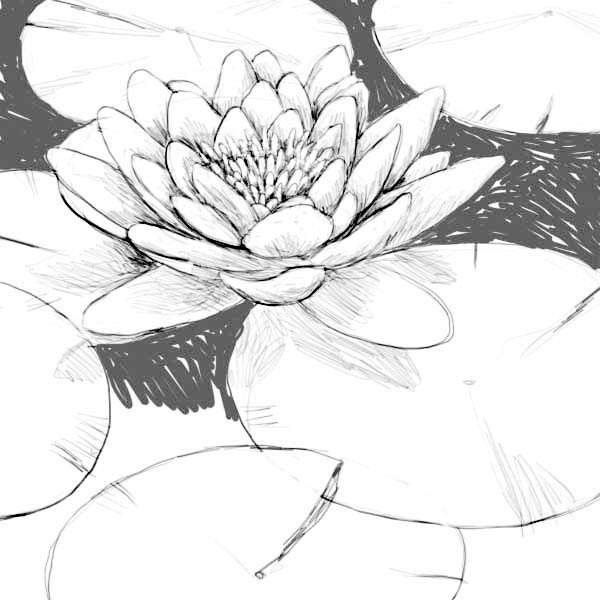 Lily Pad, : Beautiful Drawing of Lily Pad Coloring Page