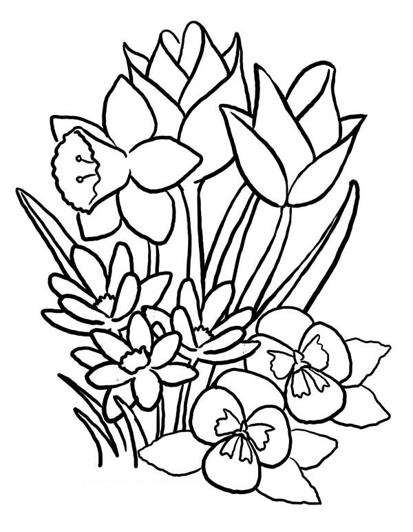 Spring Flower, : Beautiful Spring Flower Coloring Page