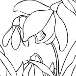 Spring Flower, Best Spring Flower Picture Coloring Page: Best Spring Flower Picture Coloring Page
