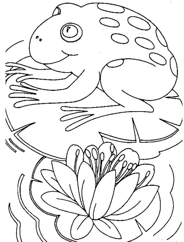 Lily Pad, : Big Frog Sitting Comfortably on Lily Pad Coloring Page