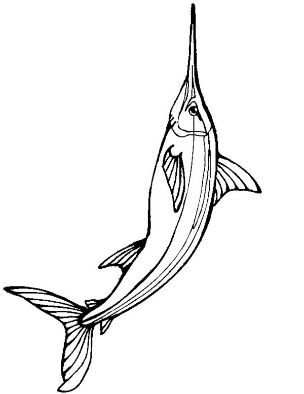 Swordfish, : Big Size of Swordfish Coloring Page