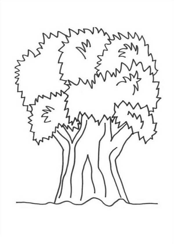 Nature, : Big Tree of Nature Coloring Page