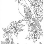 Nature, Bird Eat Worm Of Nature Coloring Page: Bird Eat Worm of Nature Coloring Page