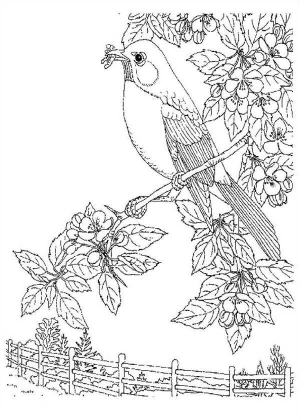 Nature, : Bird Eat Worm of Nature Coloring Page