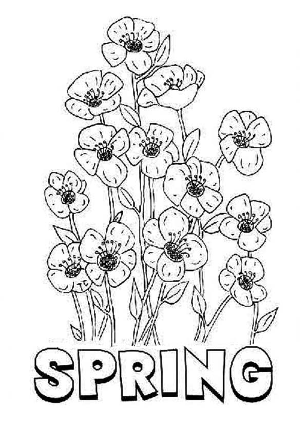 Spring Flower, : Blooming Spring Flower Coloring Page