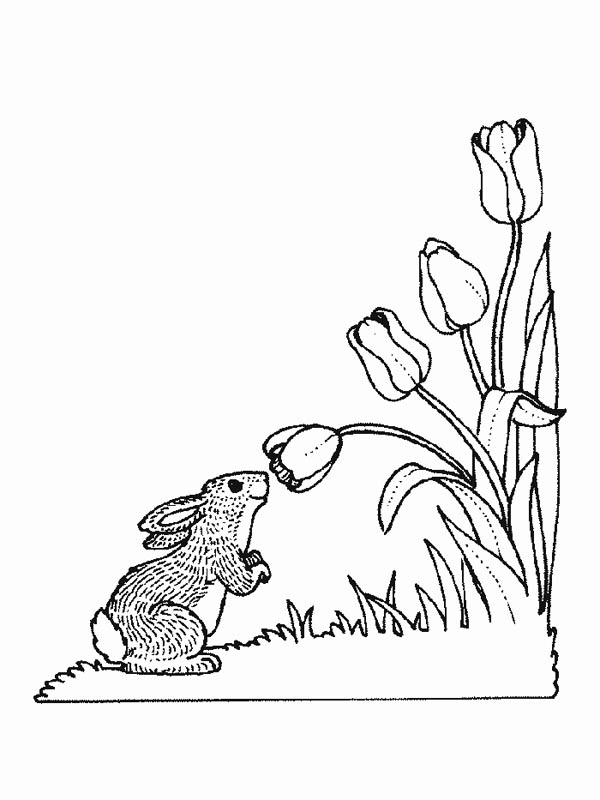 Nature, : Bunny Smelling Flower of Nature Coloring Page