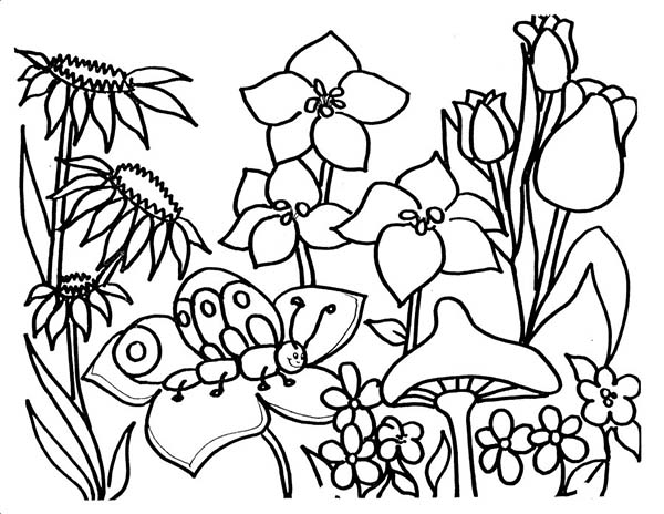 Spring Flower, : Catepillar on Spring Flower Coloring Page