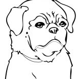 Pug, Chinese Pug Coloring Page: Chinese Pug Coloring Page