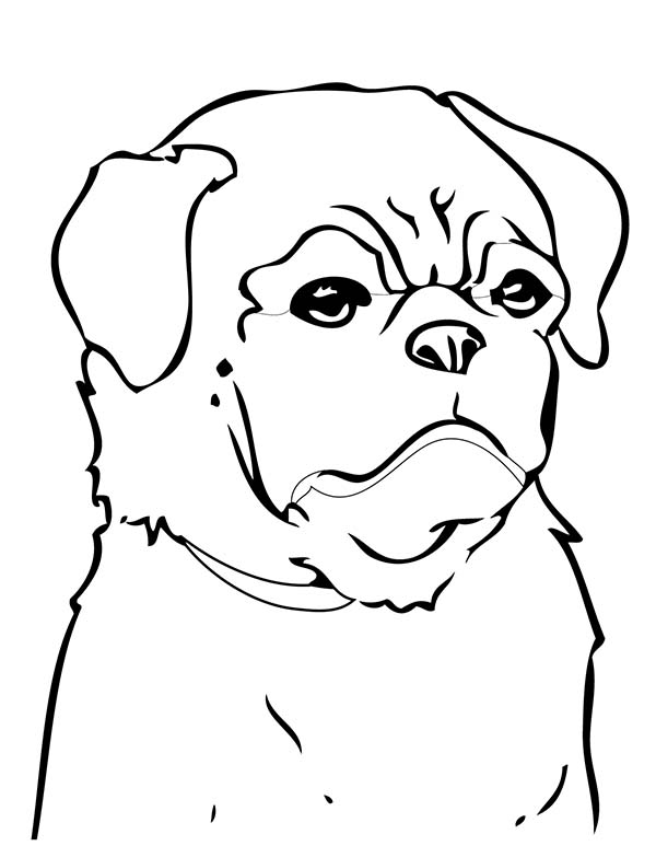 Pug, : Chinese Pug Coloring Page