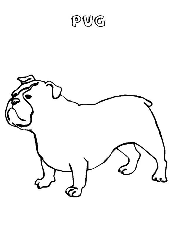 Pug, : Cute Little Pug Coloring Page