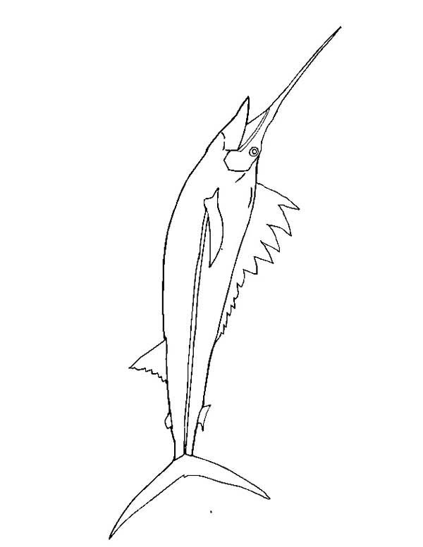 Swordfish, : Dangerous Fish Swordfish Coloring Page