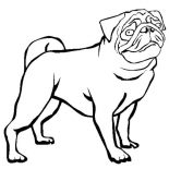 Pug, Dutch Bulldog Pug Coloring Page: Dutch Bulldog Pug Coloring Page