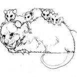 Possum, Family Of A Possum Coloring Page: Family of a Possum Coloring Page