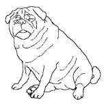 Pug, Fat Pug Dog Coloring Page: Fat Pug Dog Coloring Page