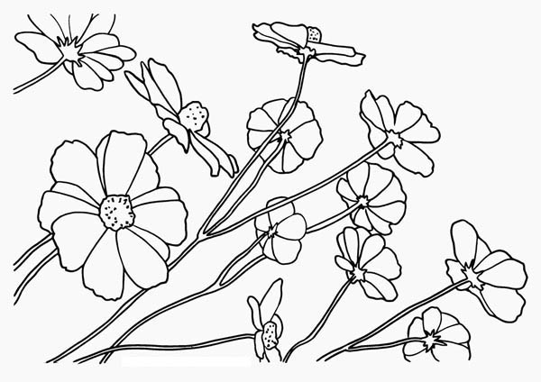 Nature, : Floral of Nature Coloring Page