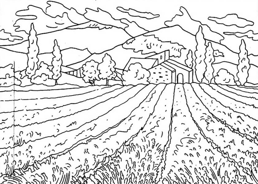 Nature, : Flower Field of Nature Coloring Page