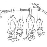 Possum, Four Brothers Of Possum Coloring Page: Four Brothers of Possum Coloring Page