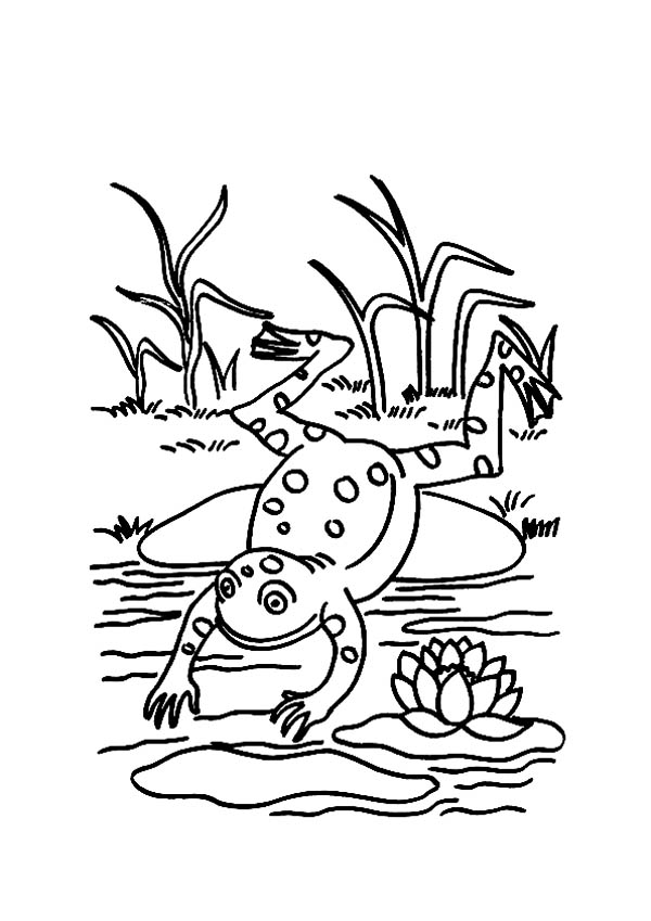Lily Pad, : Frog Jump to Pond After Sit on Lily Pad Coloring Page