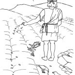 Parable of the Sower, Good Ground Where Seed Was Scattered In Parable Of The Sower Coloring Page: Good Ground Where Seed was Scattered in Parable of the Sower Coloring Page