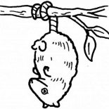 Possum, Hanging Possum Coloring Page: Hanging Possum Coloring Page