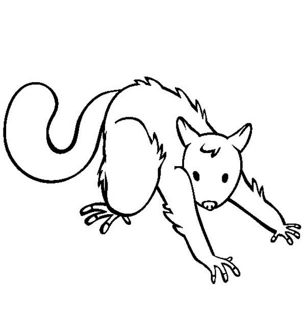 Possum, : How to Draw Possum Coloring Page