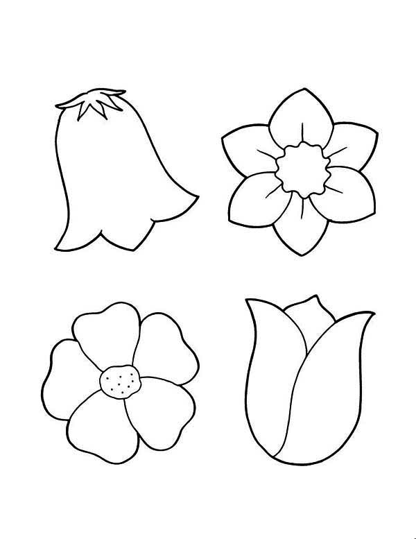 Spring Flower, : How to Draw Spring Flower Coloring Page