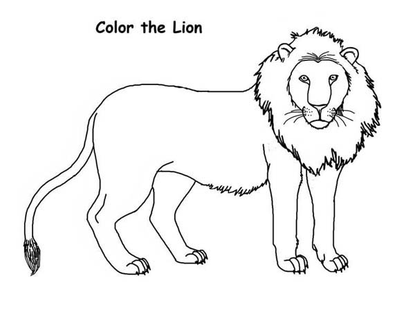 Lion, : How to Draw a Lion Coloring Page